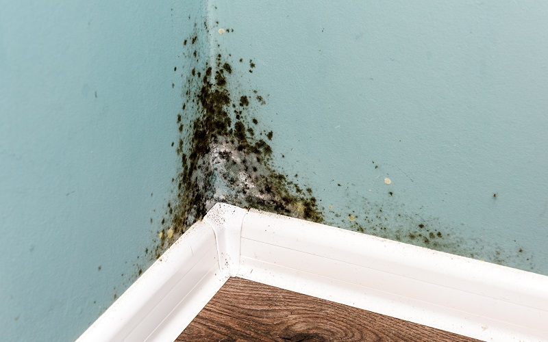 How to Prevent Mold From Coming Back