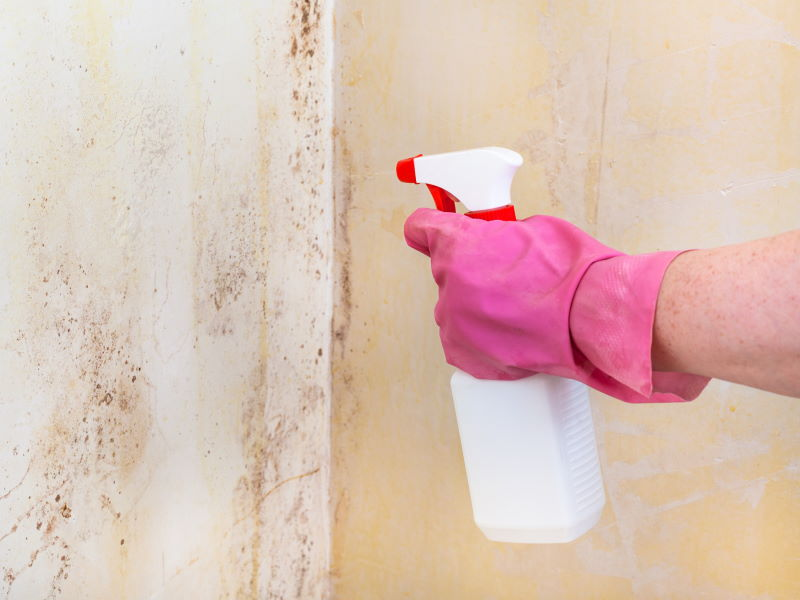 How Dangerous Is Basement Mold